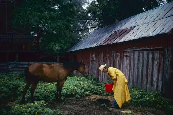 Jeff Haley, feeds his horse on the Oaks Creek ranch, Texas, USA (photo)
