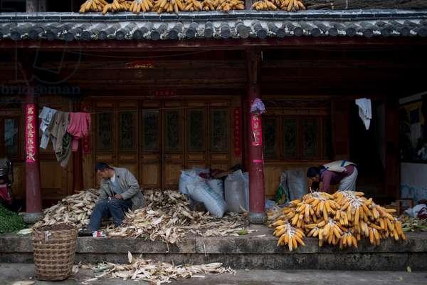 Farmer at home sort Maize, Yunnan, China (photo)