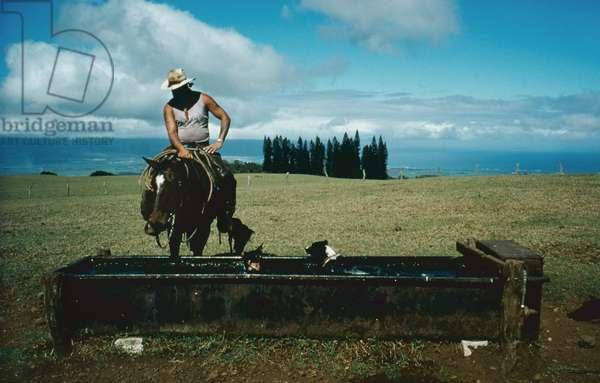 Glen Souza, Haleakala Ranch, Hawaii (photo)