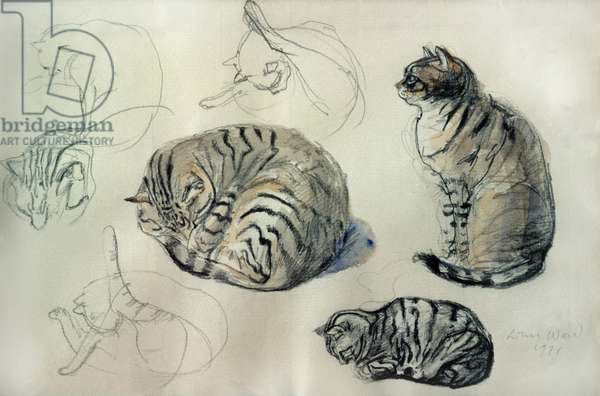Studies of a cat, 1971 (pencil and w/c)