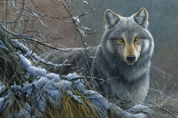 Wolf, 2013, acrylic on board