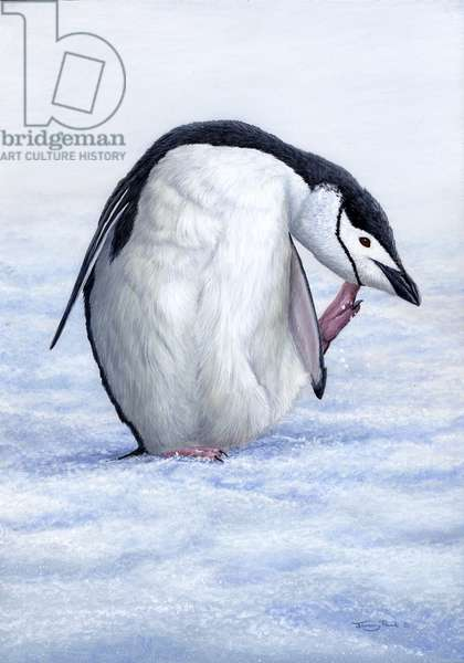 Chinstrap Penguin, 2006 (acrylic on board)