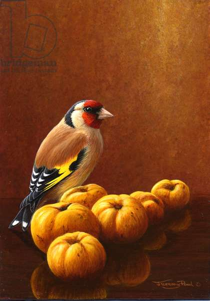Goldfinch with quinces, 2012, acylic on board