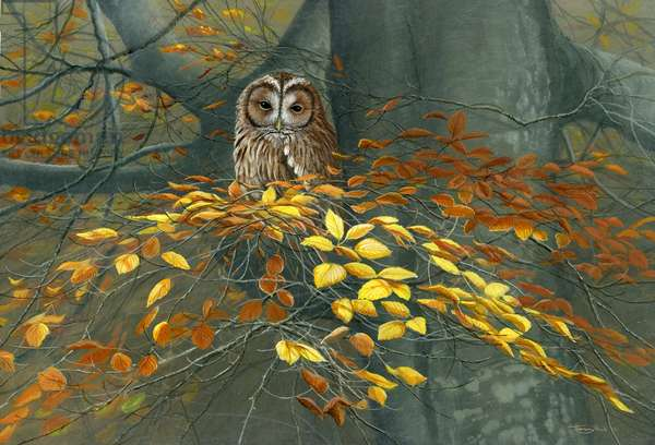 Tawny owl autumn, acrylic on board, 2017