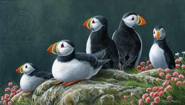 Puffins, 2019, acrylic on board