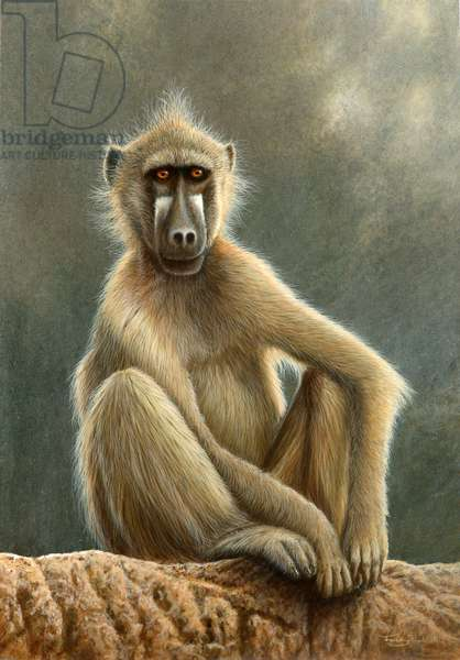 Watching the world go by - baboon, 2014, acrylic on board