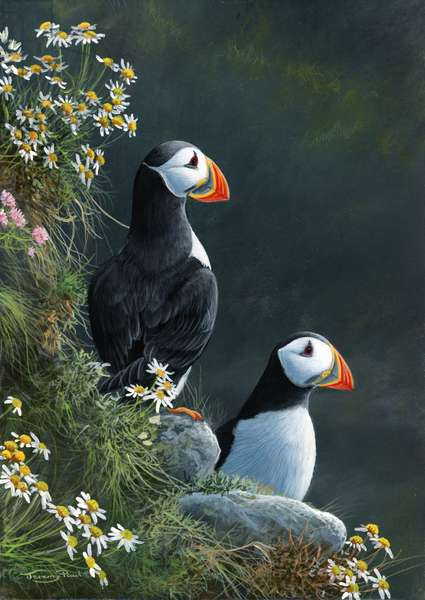 Puffins, 2013, acrylic on board