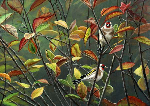 Hidden gold - goldfinches, 2015, acrylic on board