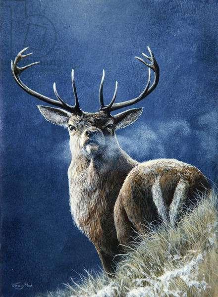 Winter's Breath, stag, 1994 (acrylic on board)