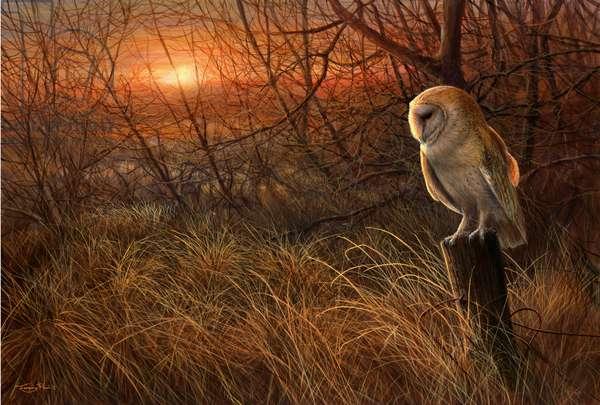 Winter Sun - Barn Owl, 2018, acrylic on board