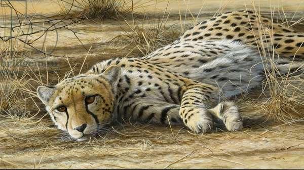 Cheetah, 2006 (acrylic on board)
