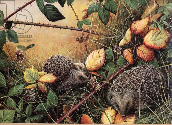 Autumn Fruits - hedgehogs, 1995, acrylic on board