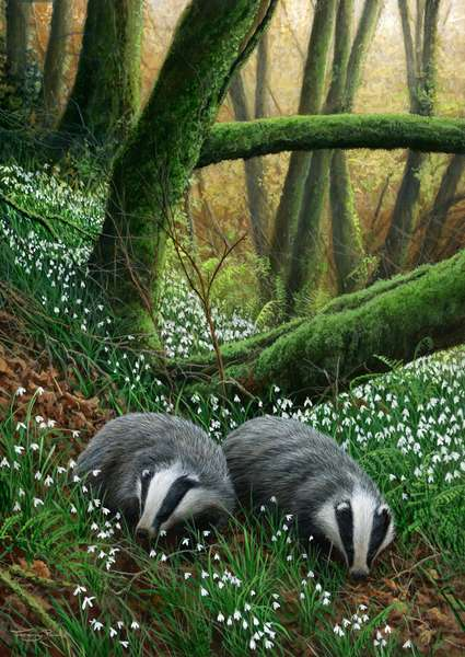 Badgers and snowdrops, 2012, acrylic on board