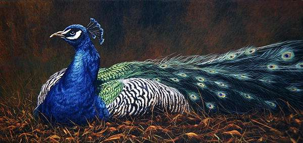 Peacock, 1997 (w/c on paper)