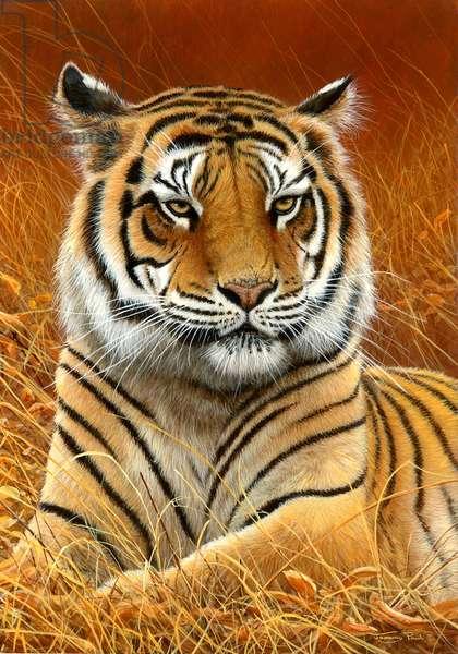 Tiger portrait, 2013, acrylic on board