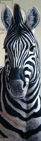 Zebra, 1999 (acrylic on board)