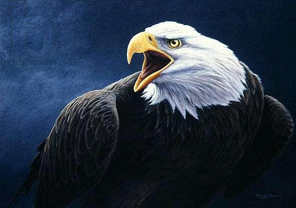 Cry of the eagle, bald eagle, 2001 acrylic on board