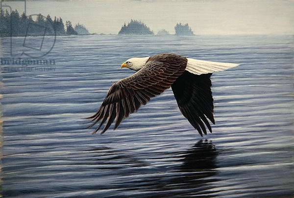 Low Flight, bald eagle, 1992 (acrylic on board)