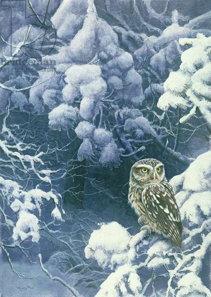 Little Owl, Winter, 1995 (acrylic on board)