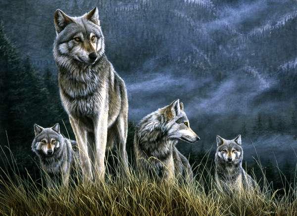 Wolves - on high ground 1994 (acrylic on board)