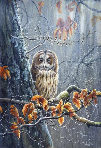 Rainy Day - Tawny Owl, 1992, acrylic on board