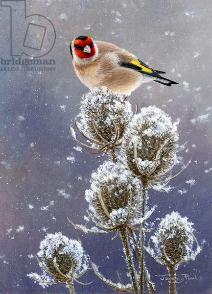 winter goldfinch, 2014, acrylic on board