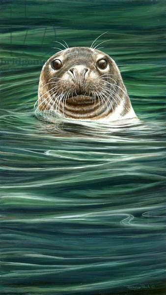 Curious seal, 2013, acrylic on board