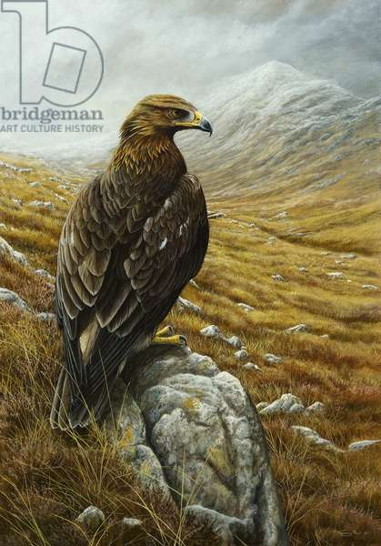 Golden Eagle, 2012, acrylic on board