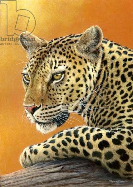 Leopard portrait, 2013, acrylic on board