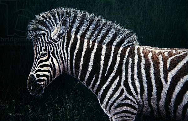 Zebra Foal, 1999 (acrylic on board)