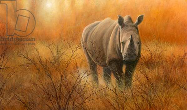 Heat and Dust - White Rhino,acrylic on board, 2016