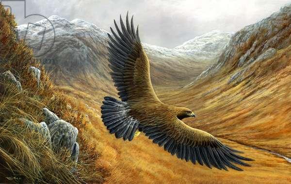 Highlands - Golden eagle, 2017, acrylic on board