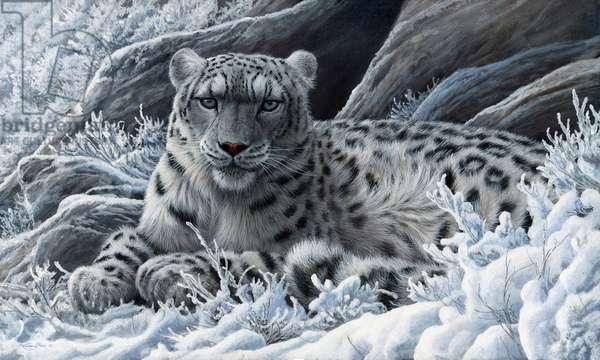 Snow leopard, 2013, acrylic on board