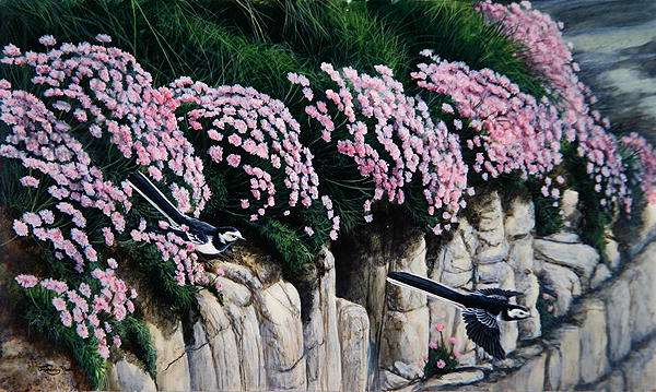 Sea Pinks, Pied Wagtail, 1993 (acrylic on board)