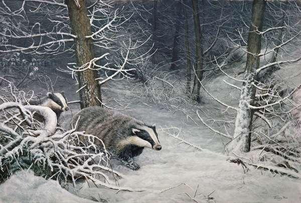 Badgers in Winter, 1991 (acrylic on board)