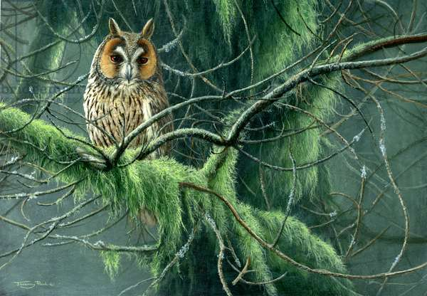Long eared owl, 2012, acrylic on board
