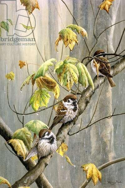 rainy day - tree sparrows, 1992, acrylic on board