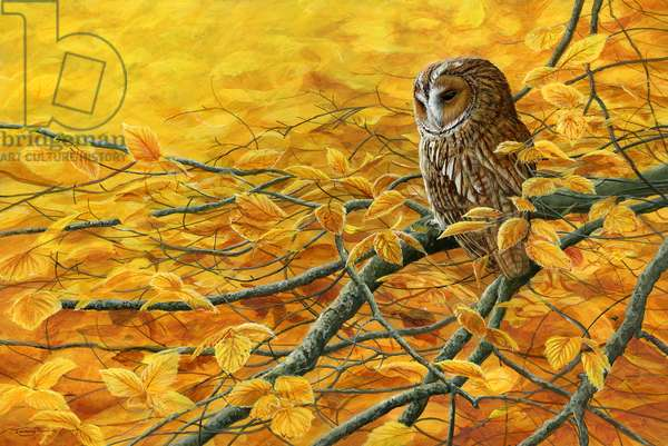 Pure gold - tawny owl, 2018, acrylic on board