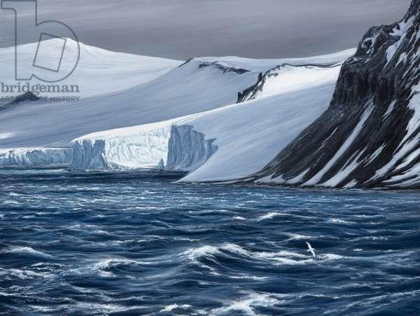 South Shetland Islands - Giant Petrel, 2006 (acrylic on board)