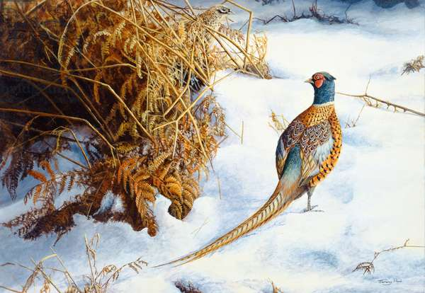 Winter gold, pheasant, 1990 (acrylic on board)