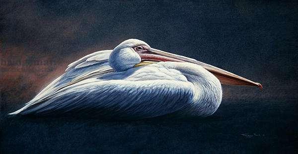 White Pelican, 2001 acrylic on board)