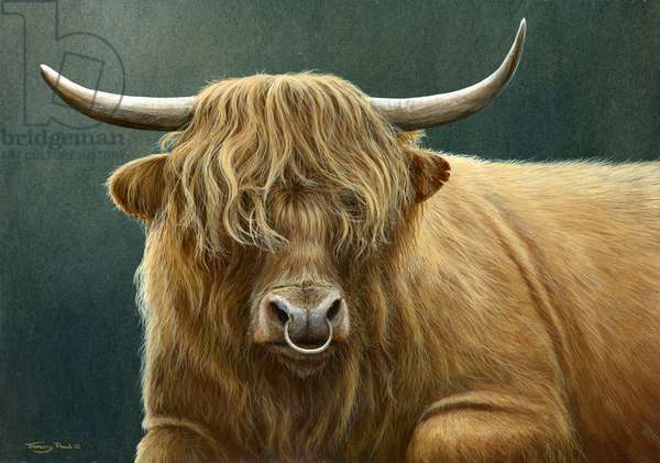 Highland Bull, 2013, acrylic on board