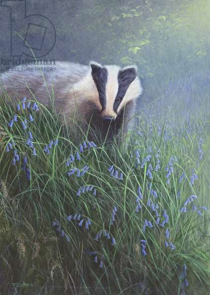 Badger in Spring, 1995 (acrylic on board)