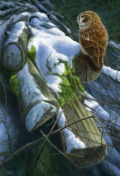 winter logs - tawny owl, 2015, acrylic on board