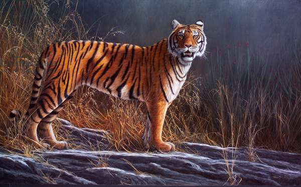 Early Light - Bengal Tiger, 2004 (acrylic on board)