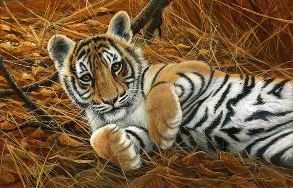 Tiger cub, 2014, acrylic on board