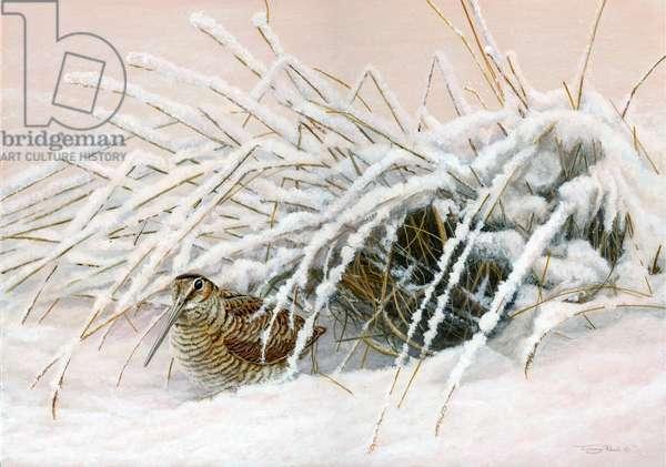 Winter woodcock, 2014, acrylic on board