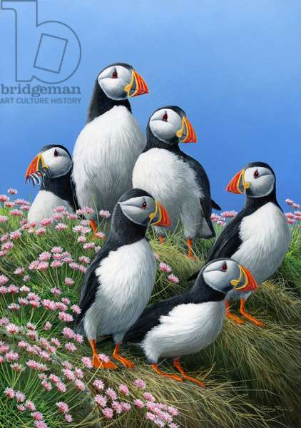 Puffins, 2013 acrylic on board