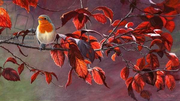 Robin, 2014, acrylic on board