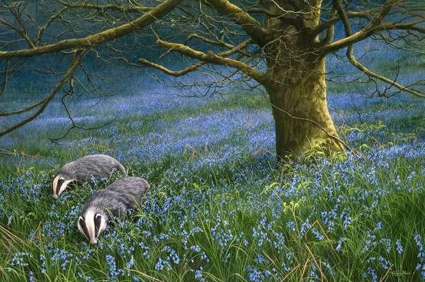 Badgers, Bluebells, 2006 (acrylic on board)